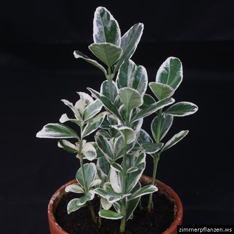 3 unbekannte Strucher  Pflanzenbestimmung  Pflanzensuche  GREEN24 Hilfe Pflege Bilder