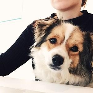Agenturhund Yaska