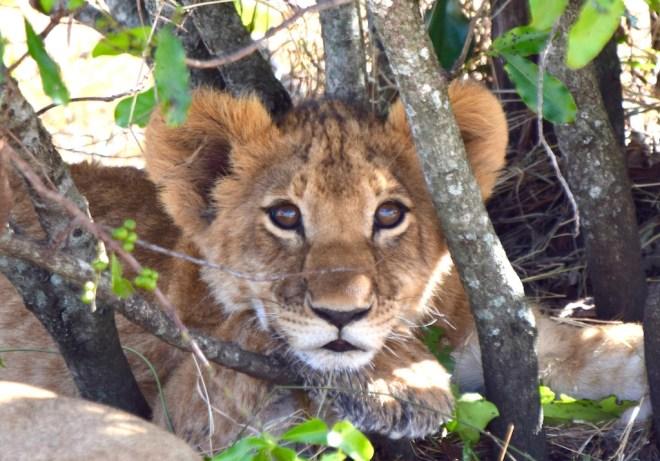 Tipps & Infos:Urlaubsküche aus der Mikrowelle - 14 Tipps für das Kochen mit der Mikrowelle: Löwenkind in Kenia