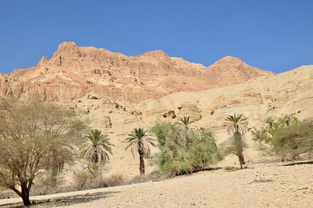Schlucht En Gedi mit einigen Büschen und Palmen - Israel