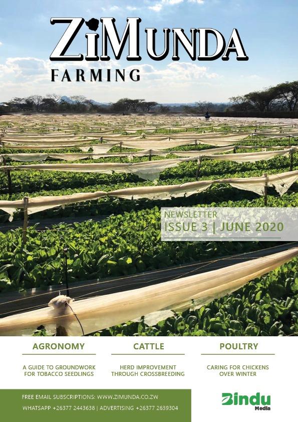 ZiMunda Newsletter Issue 3 Cover