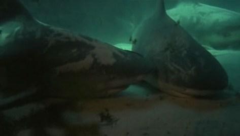 Bermudas: la cueva de los tiburones 01