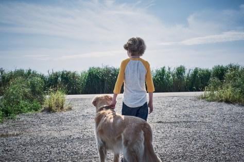 Fotograma de la película En la hierba alta, de 2019