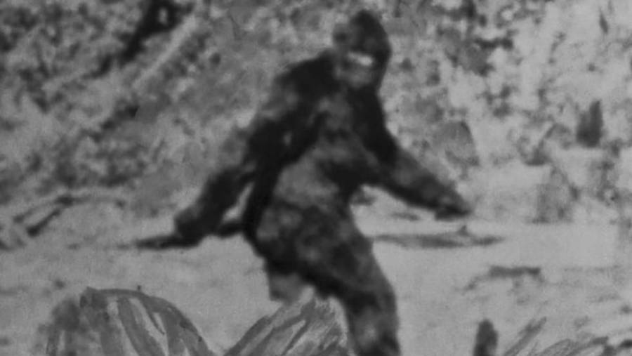 Fotografía de Bigfoot