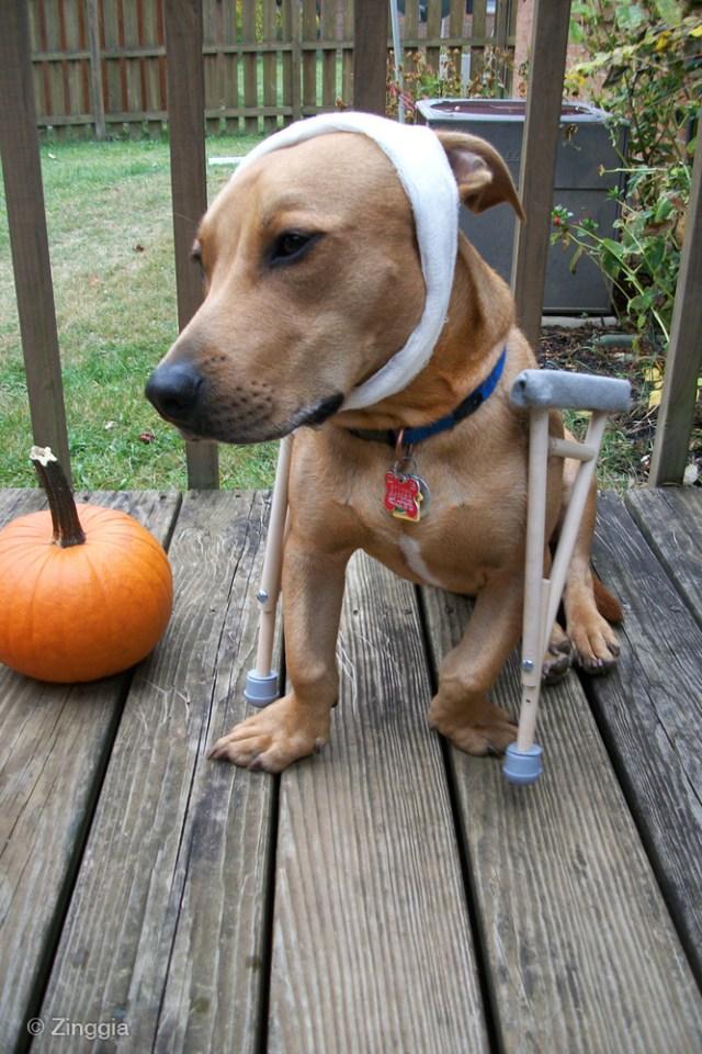 Tuna Fish Joe Dog Halloween costume