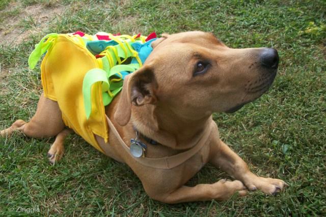 Tuna Fish Joe taco halloween dog costume