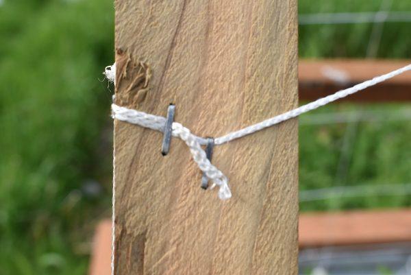 Stapling the A-frame trellis net