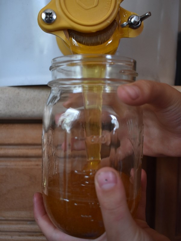 Harvesting Honey – It's Easier And Harder Than You'd Think…