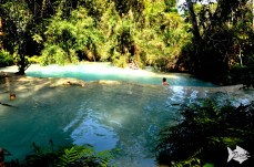 Swimming in the azure natural pools of Kuang Si surrounded by the lush tropical jungle.