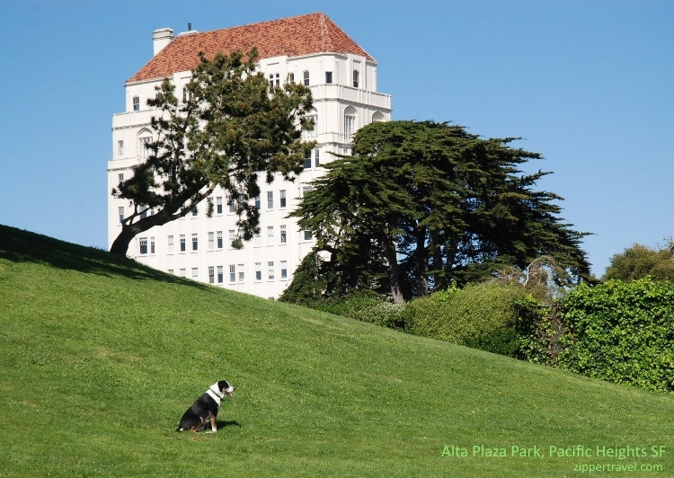 Dog Alta Plaza Park Pacific Heights San Francisco