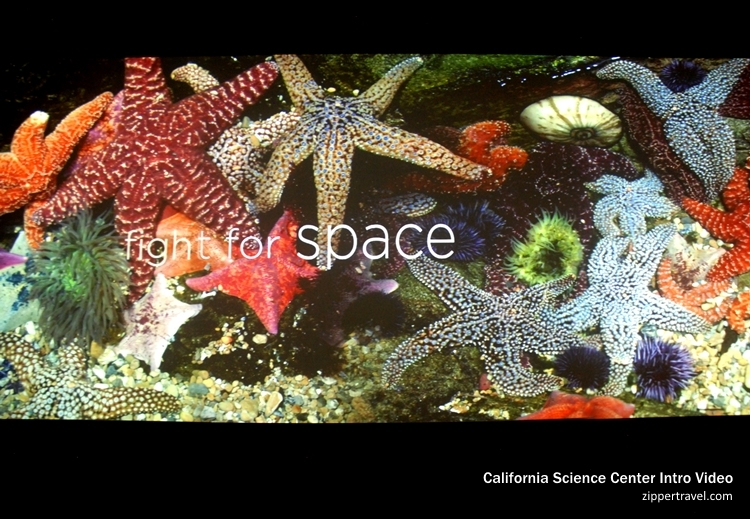 fight for space tide pool California Science Center video still
