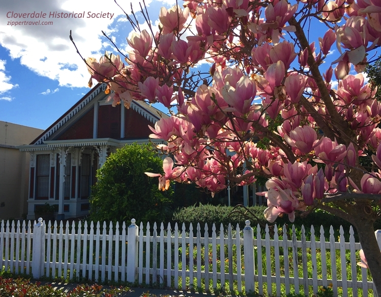 Historic house magnolia tree Cloverdale California