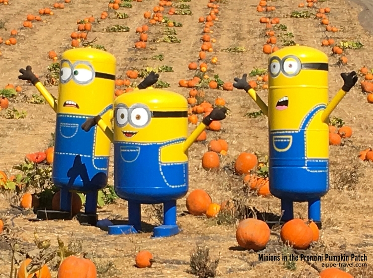 Minions Pronzini Pumpkin Patch Petaluma CA