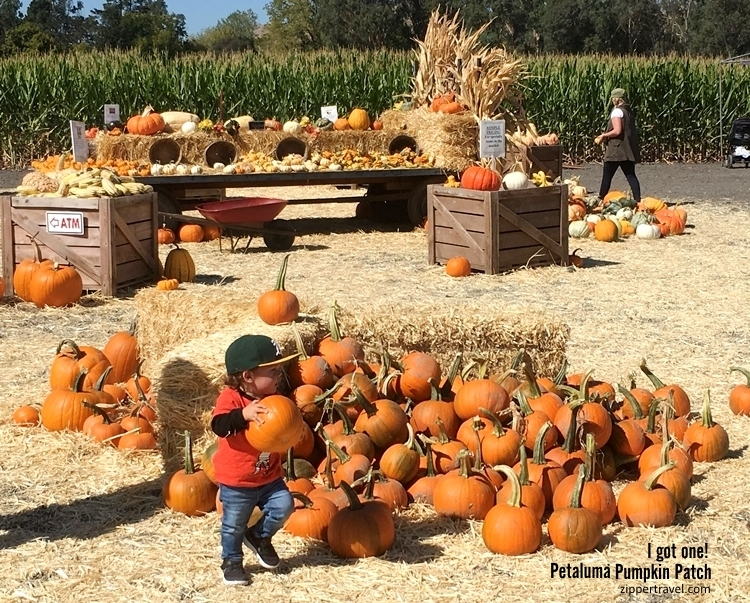 Little boy baseball cap pumpkin patch