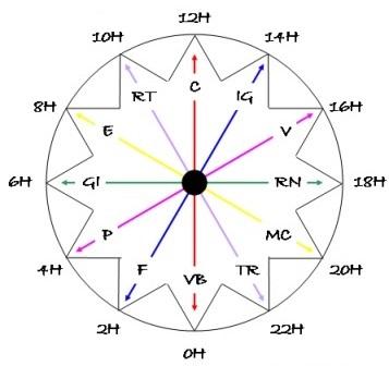 horloge circadienne