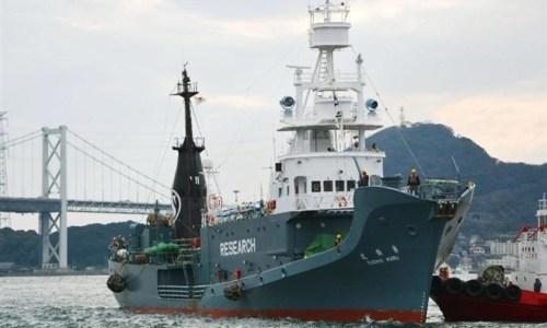 捕鯨船の給料や仕事内容は?海にいる期間はどのくらい?捕鯨はなぜダメなの?