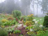 Влажные туманные дни придают саду особую неповторимую окраску