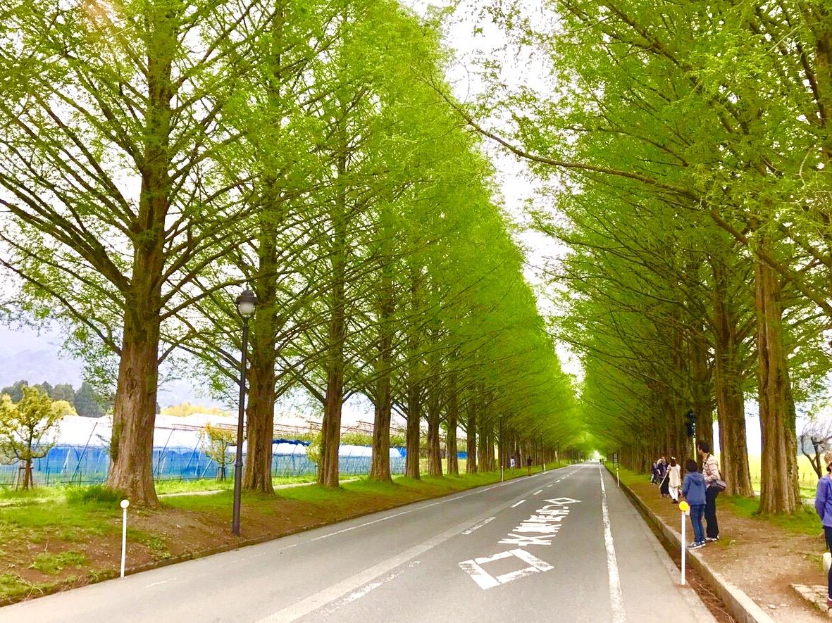 「ママチャリで琵琶湖一周!200㎞の一人旅」(地獄)