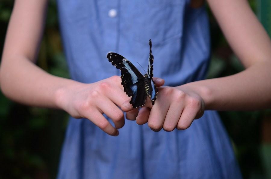 hypersenzitivní, motýl