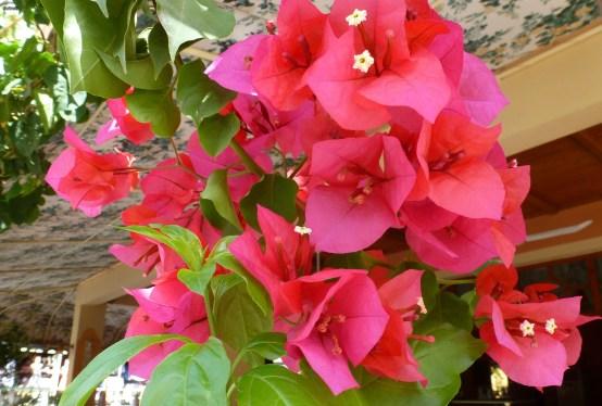 Rote Blüten es sind die kleine Dinge die das Herz erfreuen.