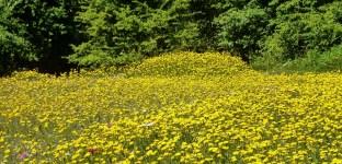Eine wunderschöne Blumenwiese..