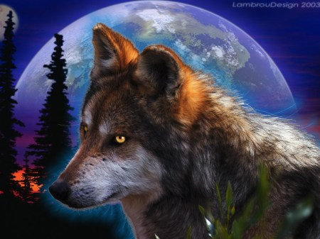 wolf_in_the_night_ll