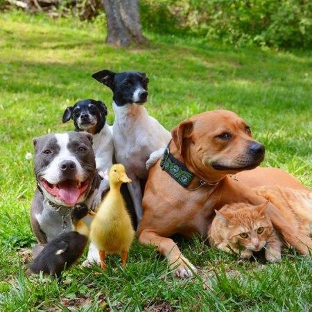 Neobično prijateljstvo sedam životinja