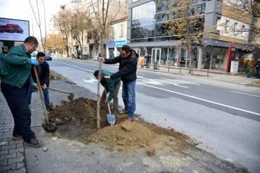 Обновен дрворед на булевар М.Т. Гологанов (2)