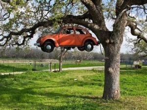 Car growing on a tree