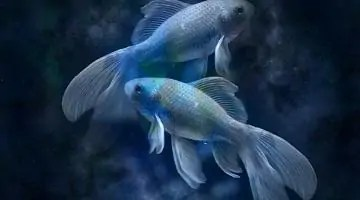 dnevni horoskop ribi