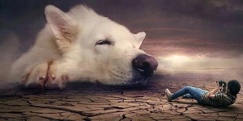 sanjati psa