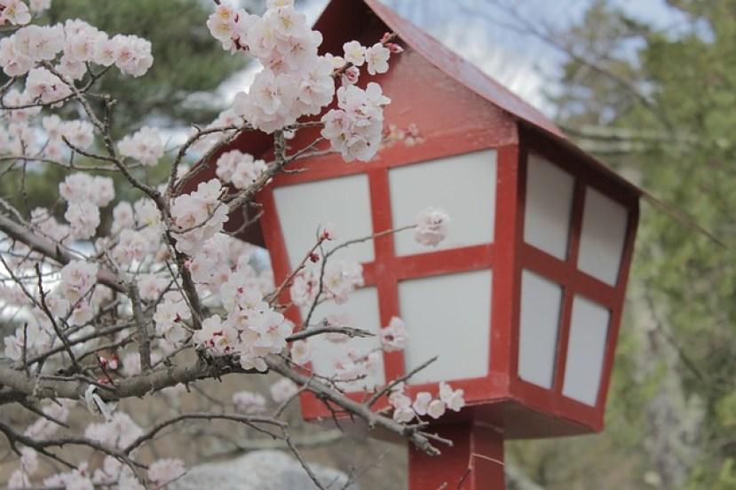יפן בעונת הפריחה
