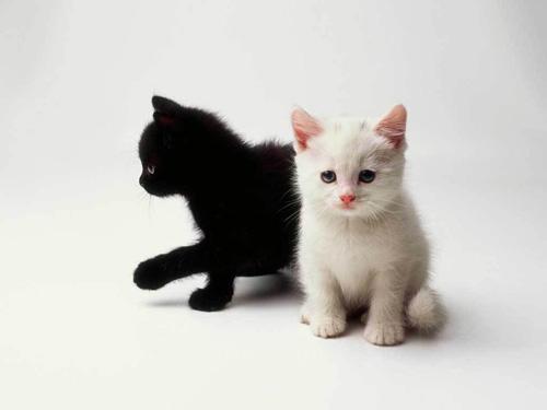 www nahé čierna mačička Gay Frat preťažovanie porno
