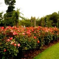 Ogród Róż Królowej Mary-Park Regenta