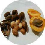 Применение ядер абрикосовых косточек в народной медицине и домашней косметологии