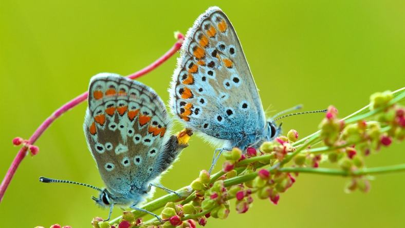 BUTTERFLIES ATTRACT FOR THEIR BEAUTY AND FOR THEIR WINGS, WHICH LOOK LIKE FLOWER PETALS 2