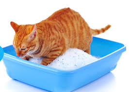 What is Crystal Cat Litter & What are the Top Benefits