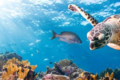 5 Ways We Can Protect Our Marine Life