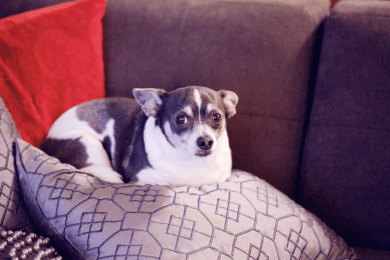 5 Easy Ways to Help Your Dog Lose Weight
