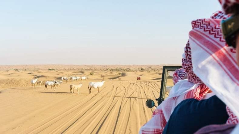 Safari in Dubai