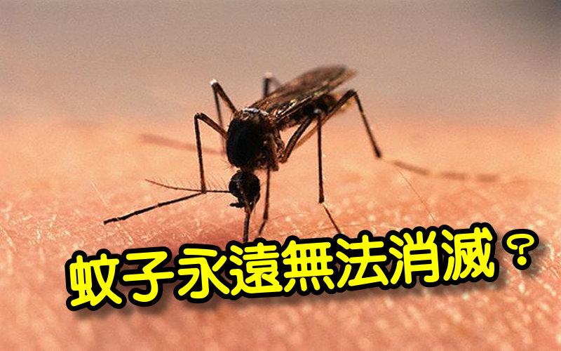 《科學小知識》不要小看牠 蚊子是生態系統中不可或缺的組成部分