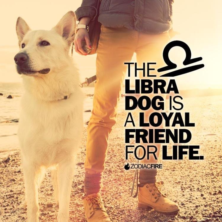 The Libra dog is a loyal friend