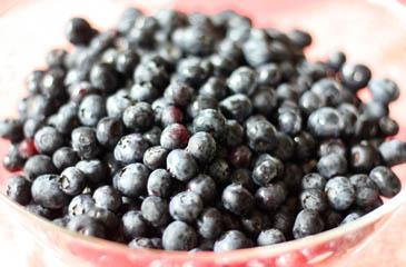 Bowl of fresh blueberries   ZoëBakes   Photo by Zoë François