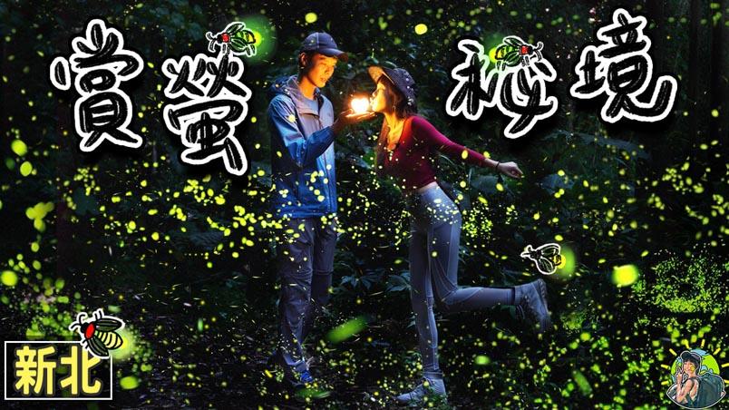坪林賞螢步道 新北螢火蟲秘境景點 | 交通 | 適合季節