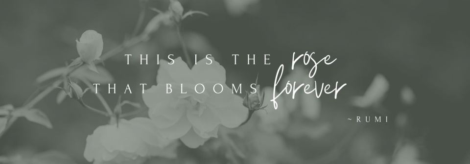 'this is the rose that blooms forever' - quote by Rumi