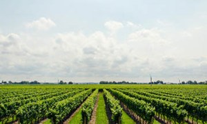 Strategic Management of Agribusiness Course