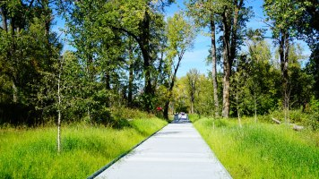 An industrial path turns into a bridge through a forested area of St. Patrick's Island.