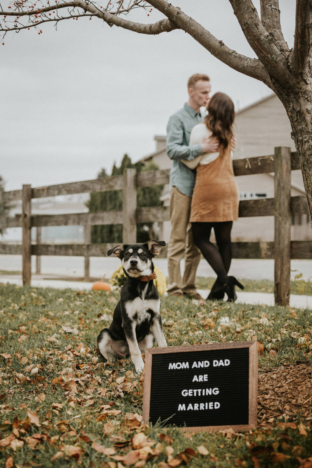 midwest engagement with dog