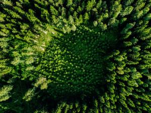 Aerial top view of green trees in the forest