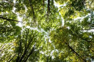 Nature. Green forest. Tree with green Leaves and sun light. Bottom view background